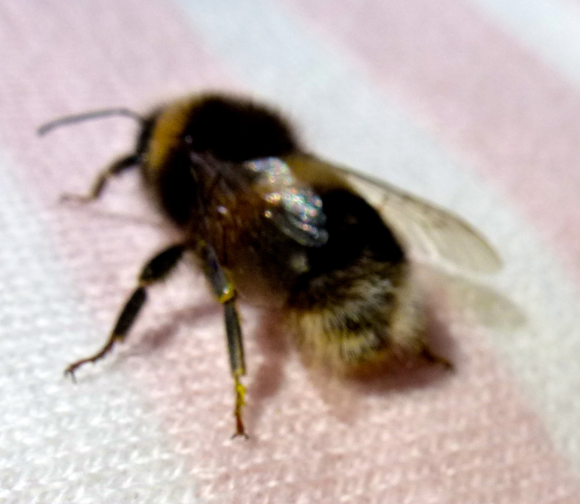 bee guys Bee guys bee removal west los angeles the bee guys offer same day bee removal and wasp control service for all west los angeles residents.